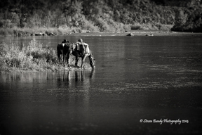 horses on the rio