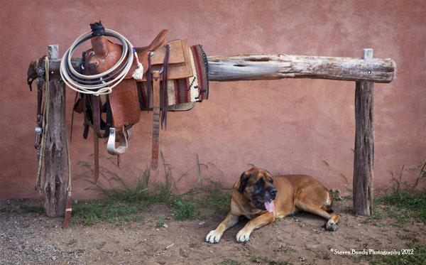 ready to be saddled