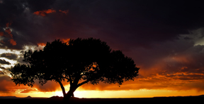 Taos Tree Sunset
